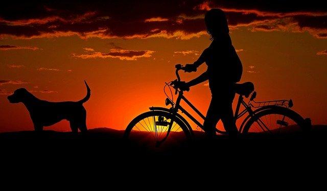 uchwyt rowerowy na dach